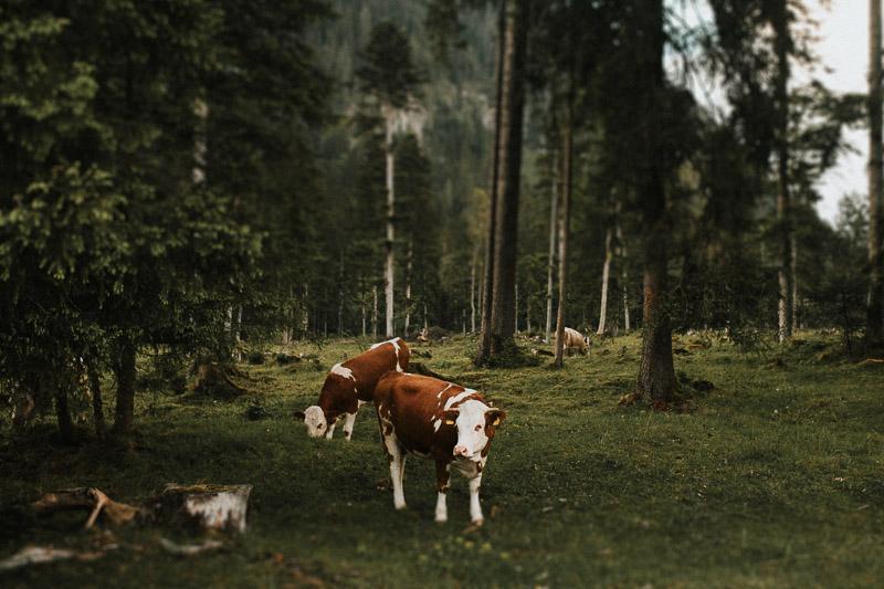 hochzeitsfotograf-moarhof-samerberg-hochzeit-002