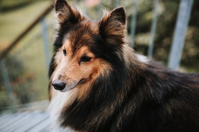 hochzeitsfotograf Kiel Hamburg Hochzeit mit Hund